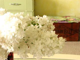 Cut white lilacs