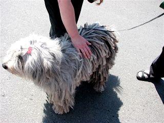 SOAM dog