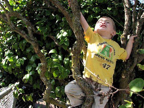 Isaac climbing tree