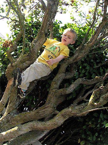 Isaac climbing Grandma's tree