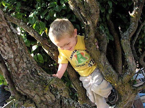 Isaac in Grandma's tree