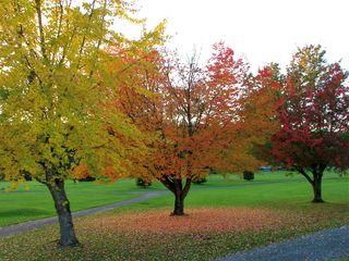 AutumnColor84