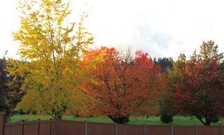 AutumnColor82