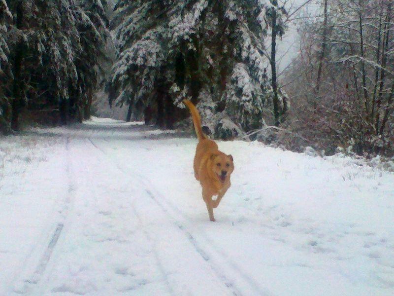 SnowJan2012.2