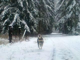 SnowJan2012.3