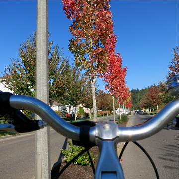 Autumn Biking