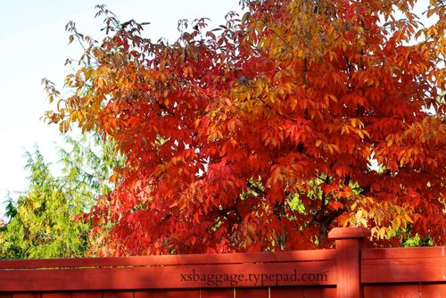 Five Favorite Things About October
