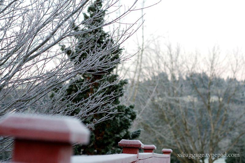 DecemberFrost2
