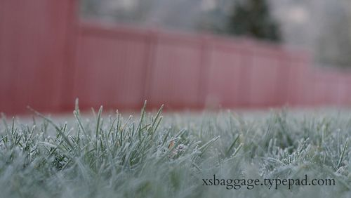 DecemberFrost1