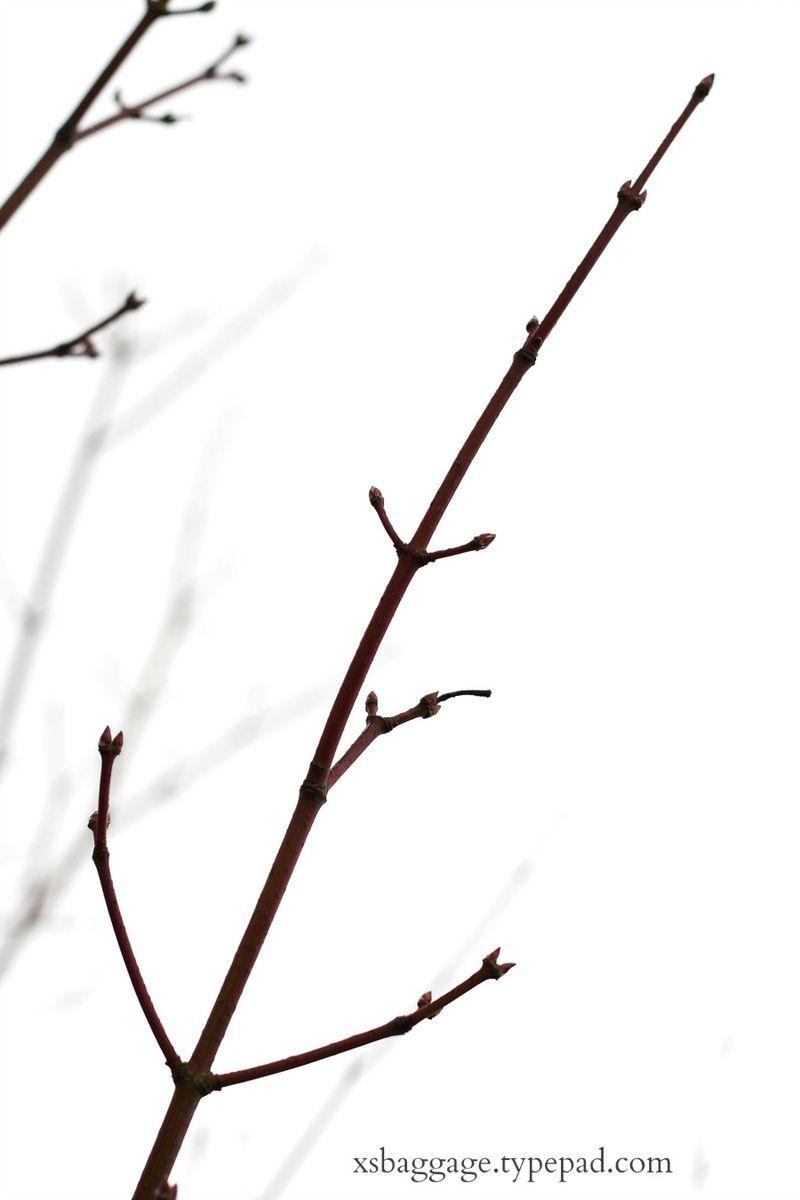 Winter20132